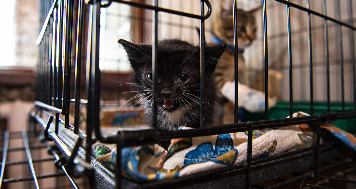 Котенок в приюте для бездомных животных