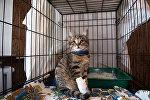 Кот в приюте для бездомных животных