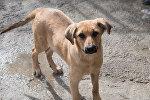 Собака в приюте для бездомных животных, архивное фото
