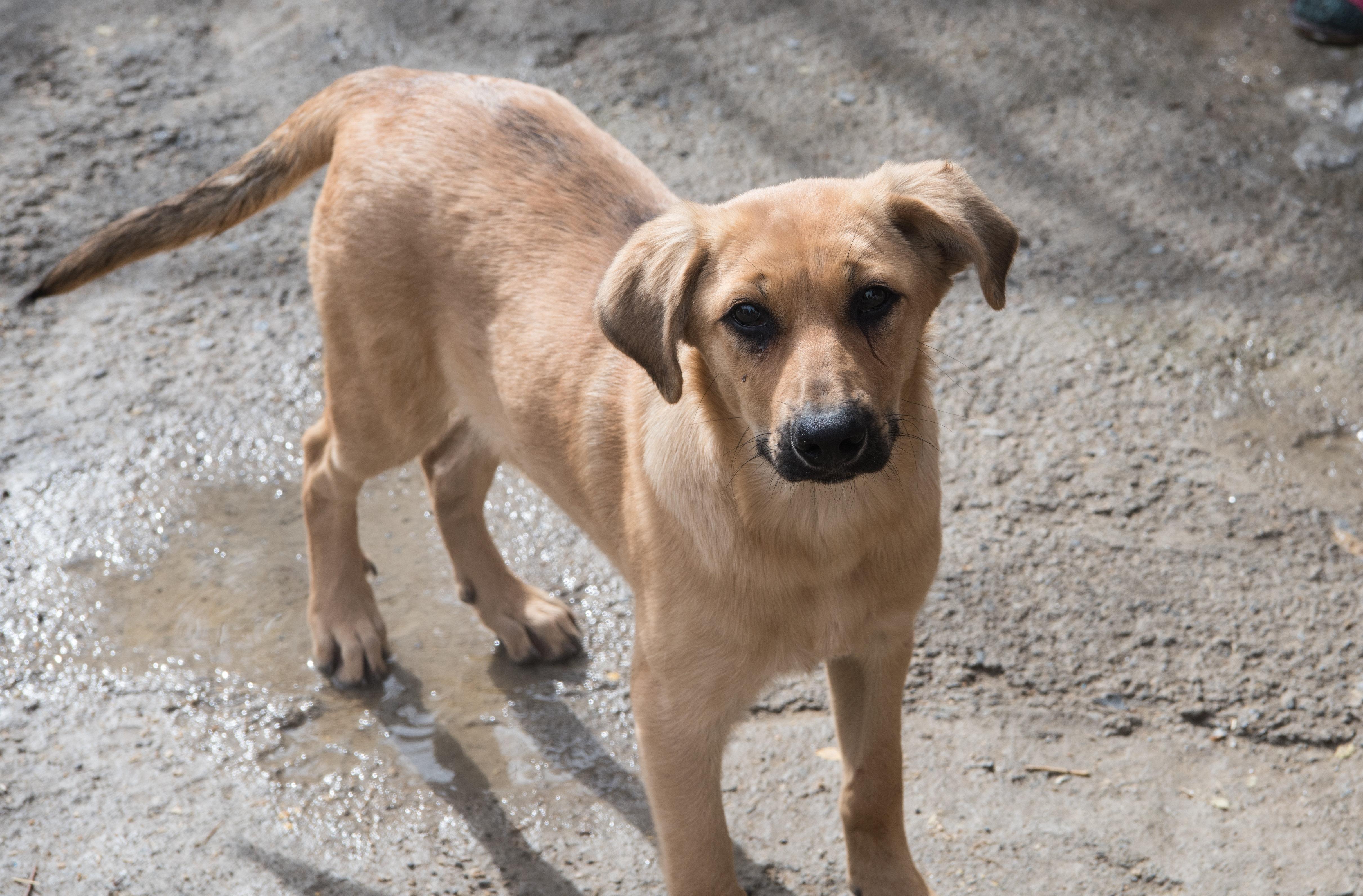 Фото собаки в приюте для бездомных животных