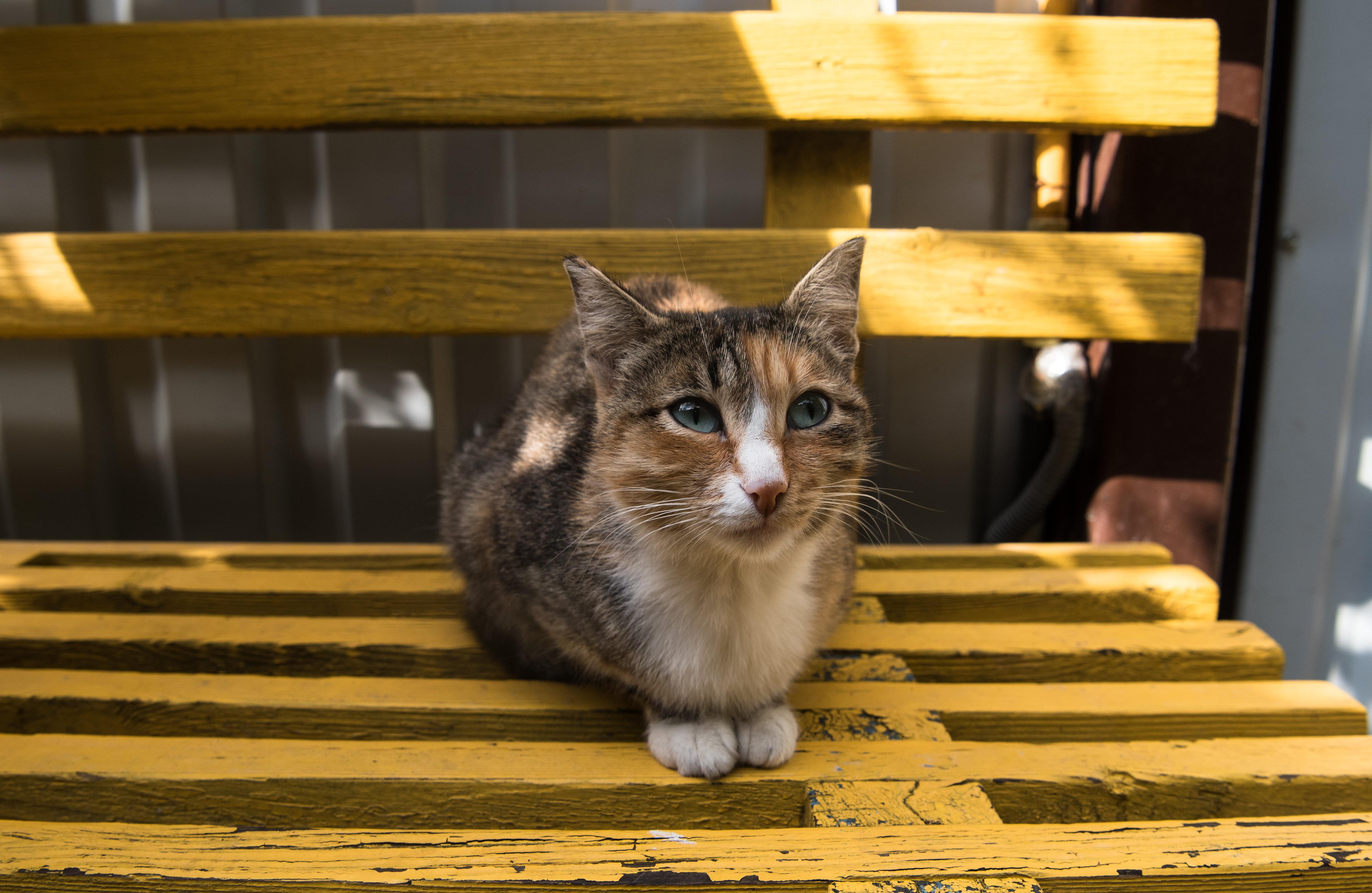 Фото кошки в приюте для бездомных животных