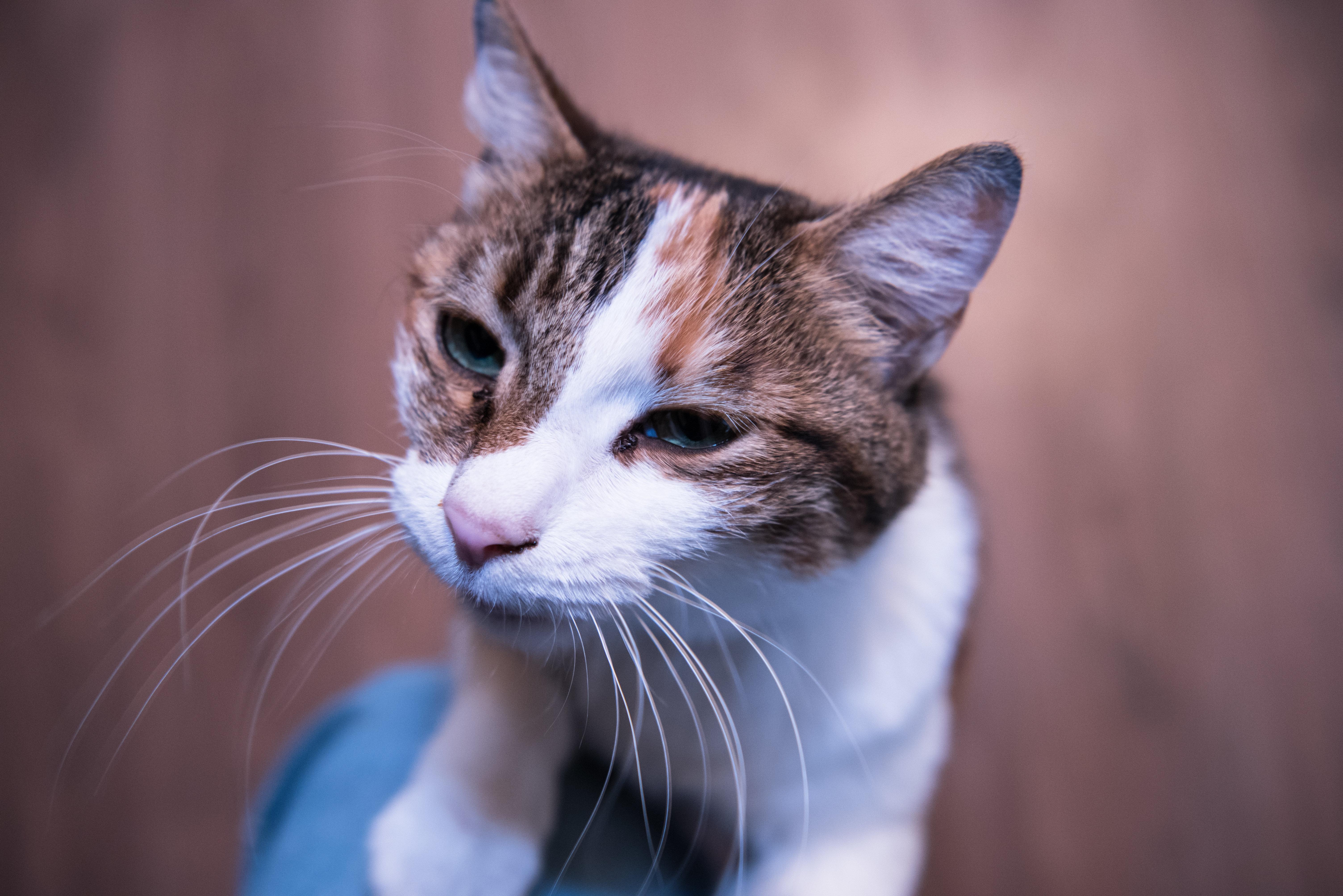 Фото кота в приюте для бездомных животных