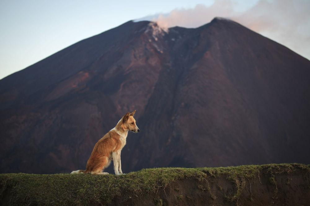 Вулкан Пакая, Гватемала
