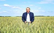 Президент Казахстана Нурсултан Назарбаев на пшеничном поле, архивное фото