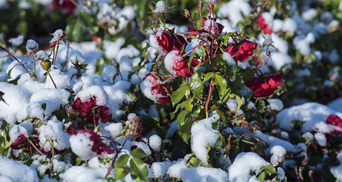 Снег в Астане