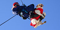 Спасатель с собакой, архивное фото