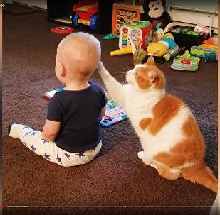 Как кошки играют с детьми – забавное видео