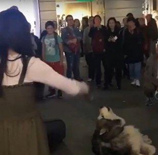 Собака подпевает уличной скрипачке в Ростове