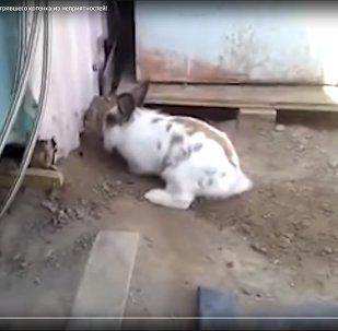 Кролик спасает котенка из заточения - видео