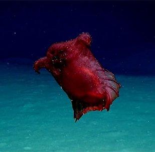 Глубоководного монстра обнаружили в Антарктике