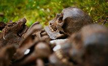 Архивное фото человеческих останков