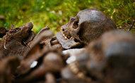 Поисковый отряд обнаружил останки солдат и боеприпасы времен ВОВ