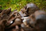 Архивное фото человеческих останков, найденных поисковыми отрядами