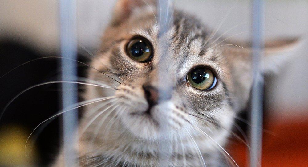 Кошка из приюта, архивное фото