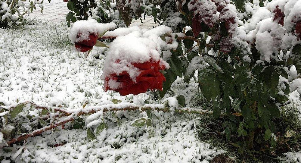 Первый снег в Восточно-Казахстанской области