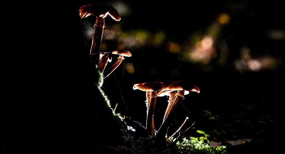 Архивное фото грибов