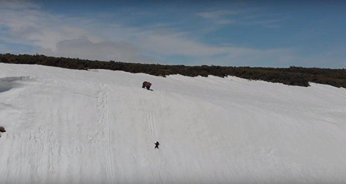 Медвежонок сорвался в снежную пропасть