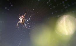 Паук в паутине, иллюстративное фото