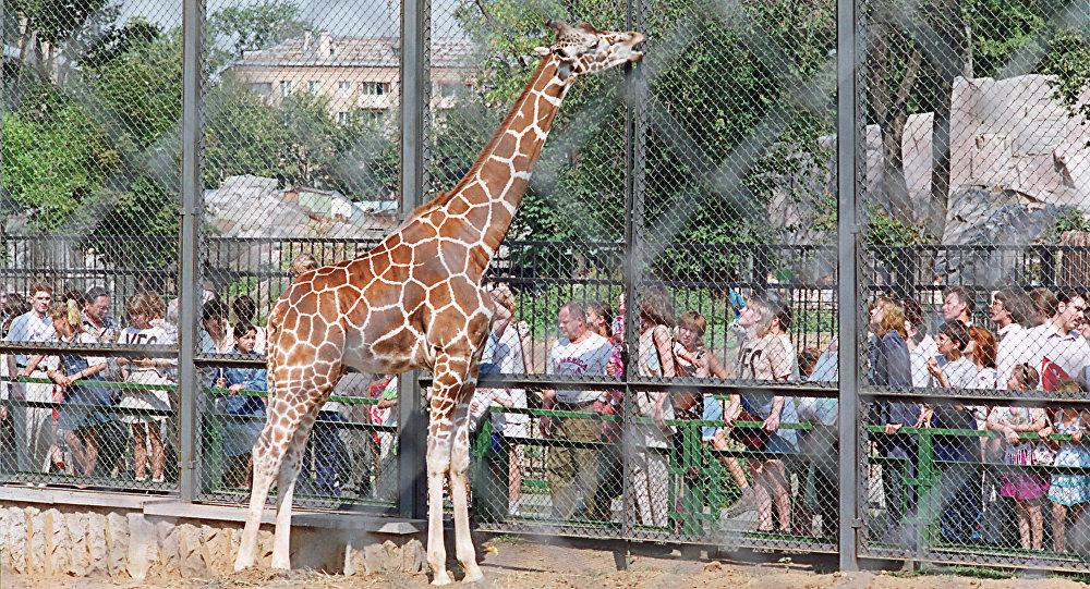 Зоопарктегі керік