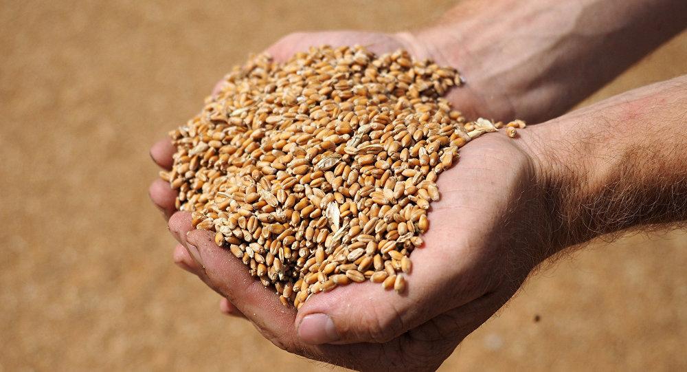 Казахстан вследующем году увеличил производство зерновых неменее