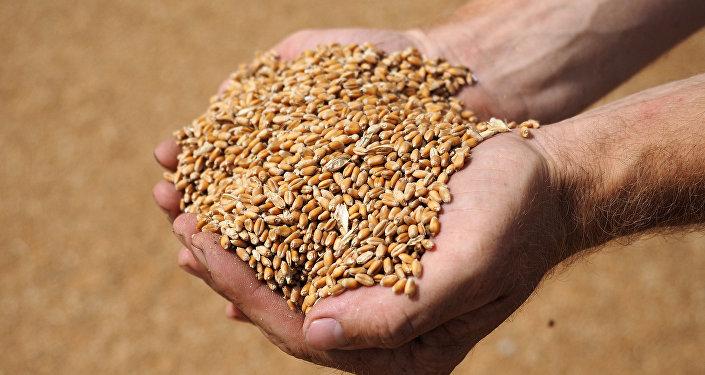 Урожай зерна
