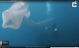 Морское существо - видео