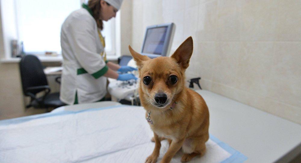 Челябинская ветеринарная станция