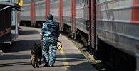 Сотрудник полиции с собакой, архивное фото