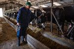 Архивное фото коров на ферме