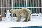 Белый медведь в Алматинском зоопарке