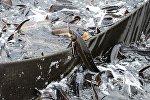 Рыбоводческий комплекс, архивное фото