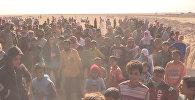 Мосулдан қаласынан қашқан ирак босқындары Сириямен шекарада жиналып қалды.