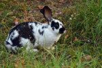 Кролик, архивное фото