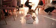 Собаки работают официантами в китайском кафе