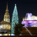 Лондондағы Трафальгар алаңында орналасқан рождество шыршасы.