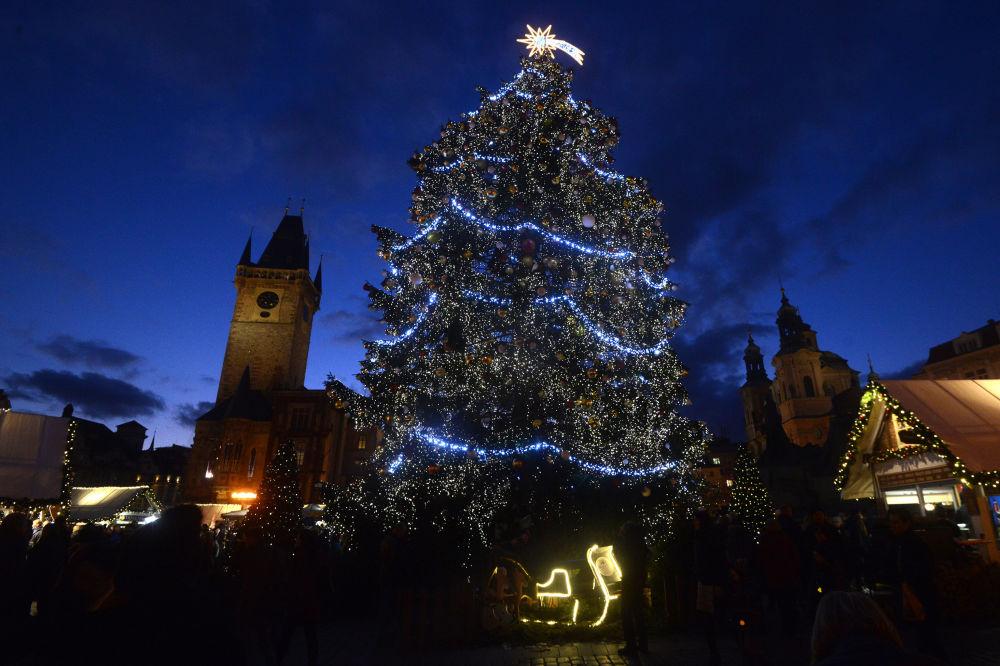 Прагадағы рождество шыршасы