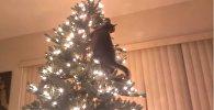 Коты против елок - новогодняя видео подборка