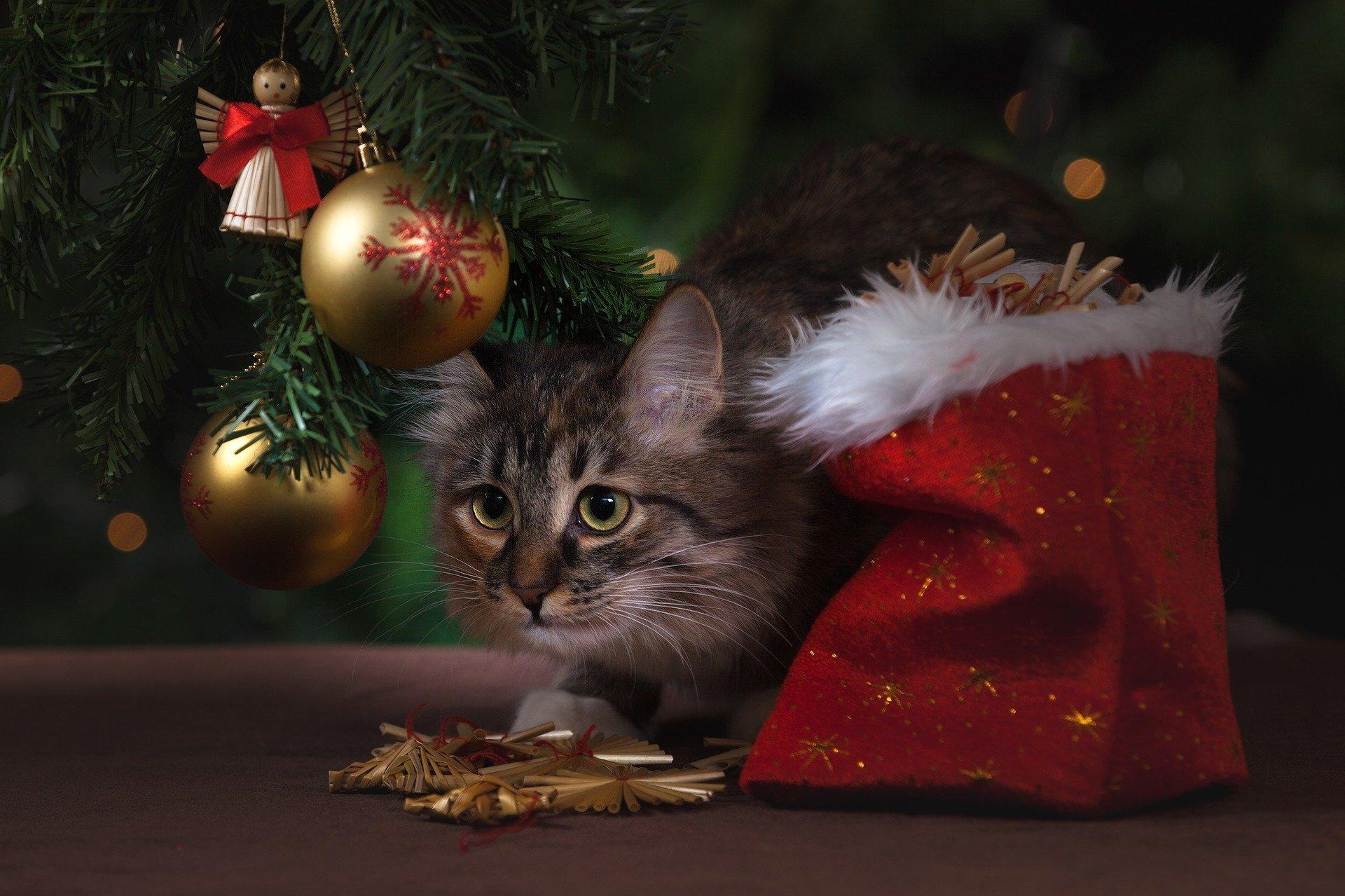 Кот под елкой, иллюстративное фото