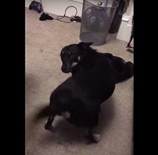 Пес танцует тверк