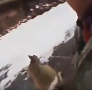 Охотник спас косулю на замерзшем озере