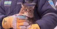 Кошка, извлеченная из квартиры жилого дома на проспекте Карла Маркса в Магнитогорске, где произошло обрушения одного из подъездов