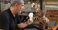 Балмұздаққа құмар мысық - видео