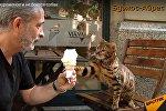 Кот любит мороженое - видео