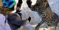 Алматы зообағында бүлдіршін леопардпен ойнап тұр - видео