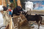 Вертеп с живыми животными установили накануне Рождества во дворе храма в Петропавловске