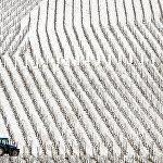 Трактор пробирается через заснежнный виноградник Дурбаха в южной Германии