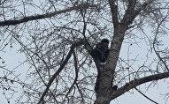 Кошка двое суток просидела на дереве