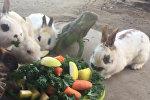 Кролик, ящереца, черепаха - совместный ужин - видео