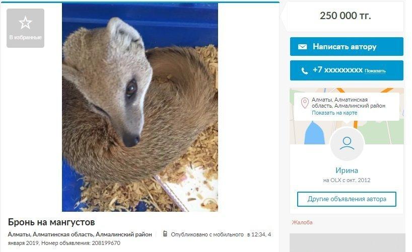 Объявление о продаже мангуста