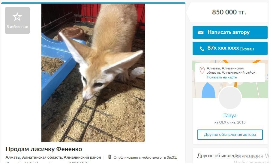 Объявление о продаже лисы
